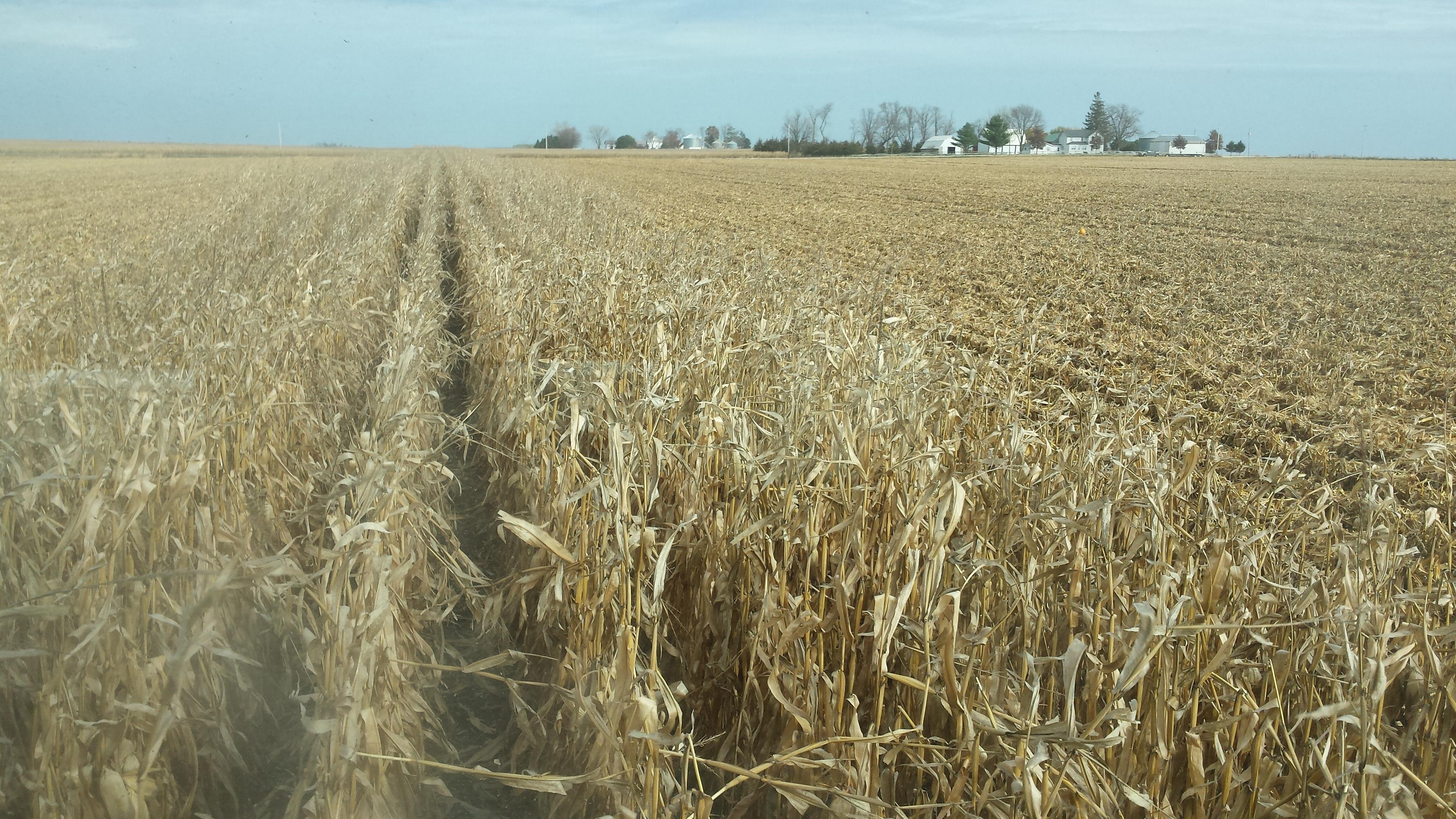 Harvest on John Schipper's farm.